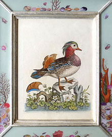 One of a series of late 18th century antique bird prints by George Edwards